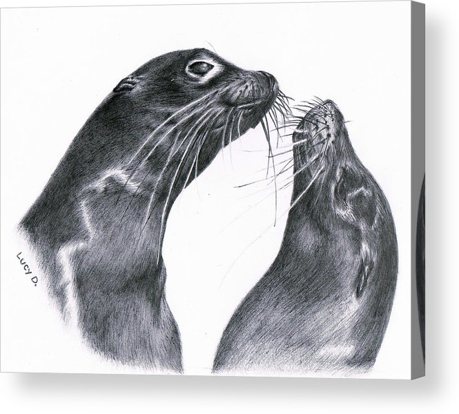 Sea Lion Acrylic Print featuring the drawing Lions by Lucy D