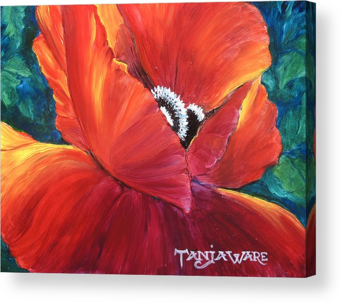 Poppy Acrylic Print featuring the painting Scarlet Poppy by Tanja Ware
