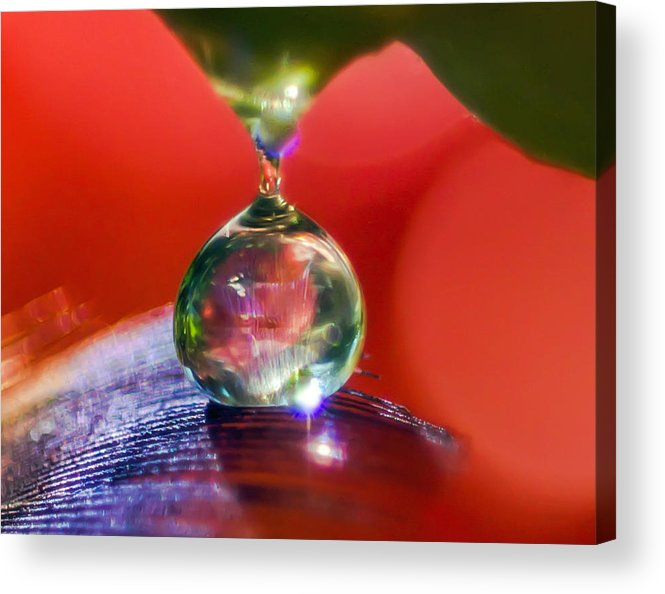 Feathers Acrylic Print featuring the photograph Taste Your Desire by Kenneth Haley