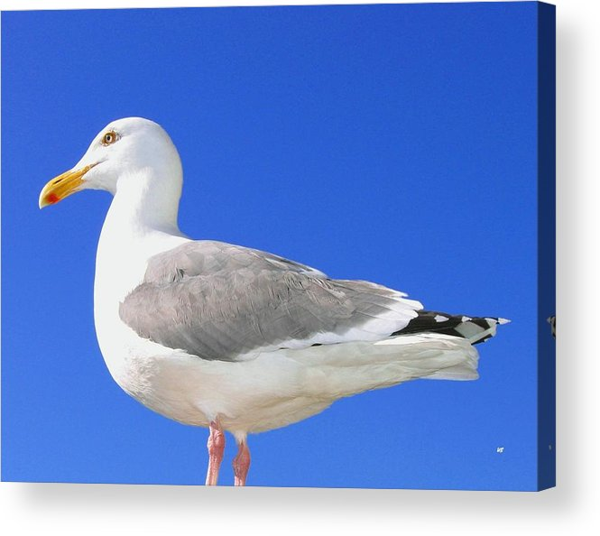 The Admiral Acrylic Print featuring the photograph The Admiral by Will Borden