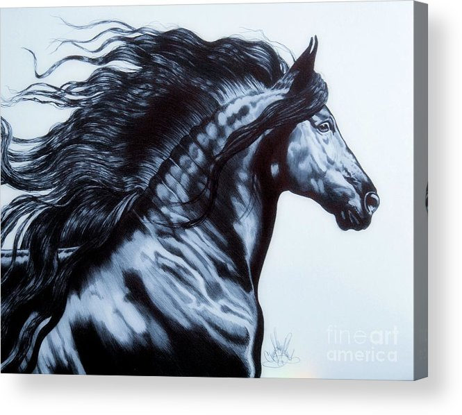 Horse Art Acrylic Print featuring the drawing Frederik The Great - Beautiful Friesian  by Cheryl Poland