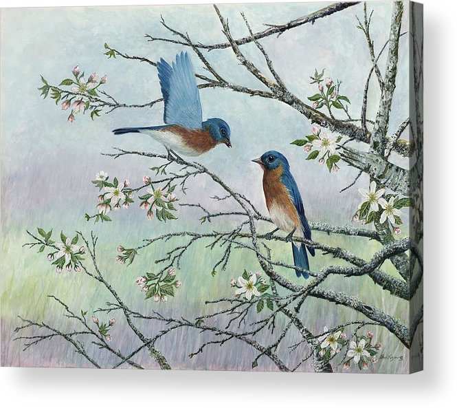 Bluebirds; Trees; Wildlife Acrylic Print featuring the painting The Gift by Ben Kiger
