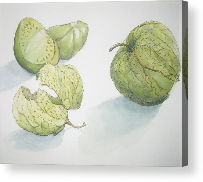 Pen And Ink Drawing Acrylic Print featuring the painting Tomatillos by Maria Hunt