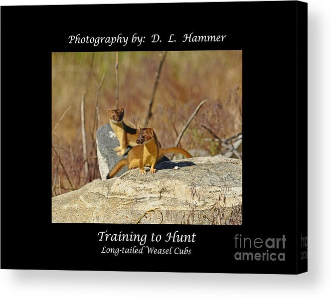 Wildlife Acrylic Print featuring the photograph Training To Hunt by Dennis Hammer