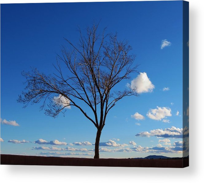 Tree Acrylic Print featuring the photograph Waiting For Spring by Feva Fotos