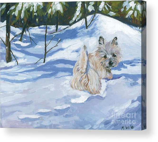 Cairn Terrier Acrylic Print featuring the painting Winter Romp by Molly Poole