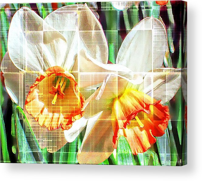 Daffodils Acrylic Print featuring the photograph Abstract Daffodils by Cathie Tyler