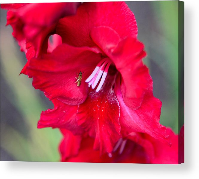 Bee Acrylic Print featuring the photograph Bee Glad by Christopher McPhail