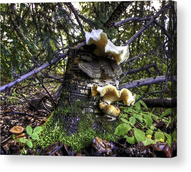 Mushroom Acrylic Print featuring the photograph Forest Fungi by Grover Woessner