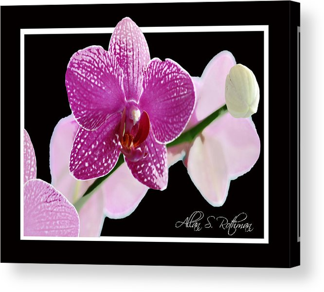 White Acrylic Print featuring the photograph Orchid 3 by Allan Rothman