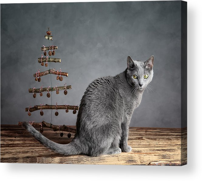 Cat Acrylic Print featuring the photograph Cat Christmas by Nailia Schwarz
