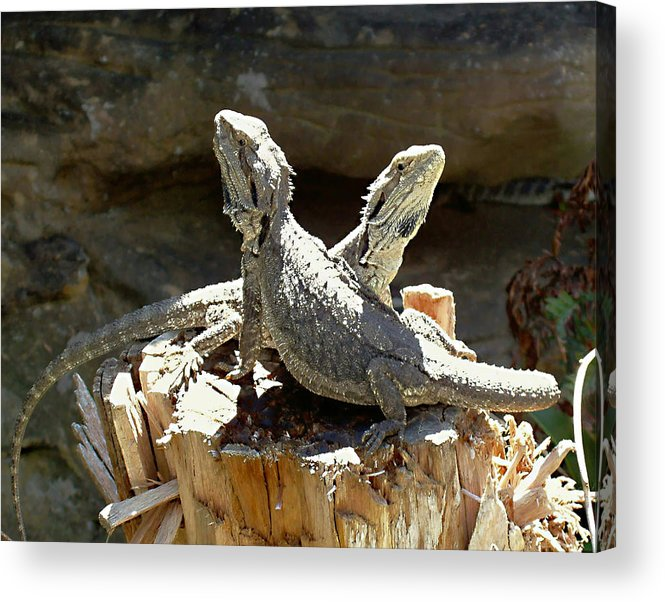 Amphion And Zethus Acrylic Print featuring the photograph Amphion And Zethus by Ellen Henneke