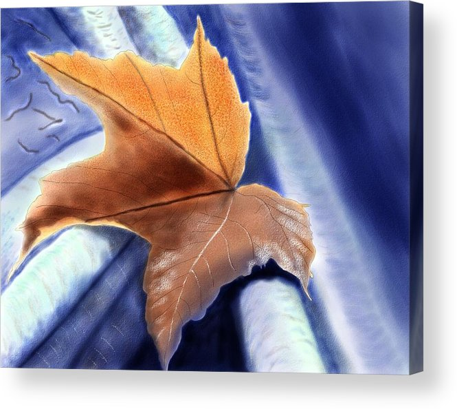 Acrylic Print featuring the painting Autumn Leaf by John Shioli