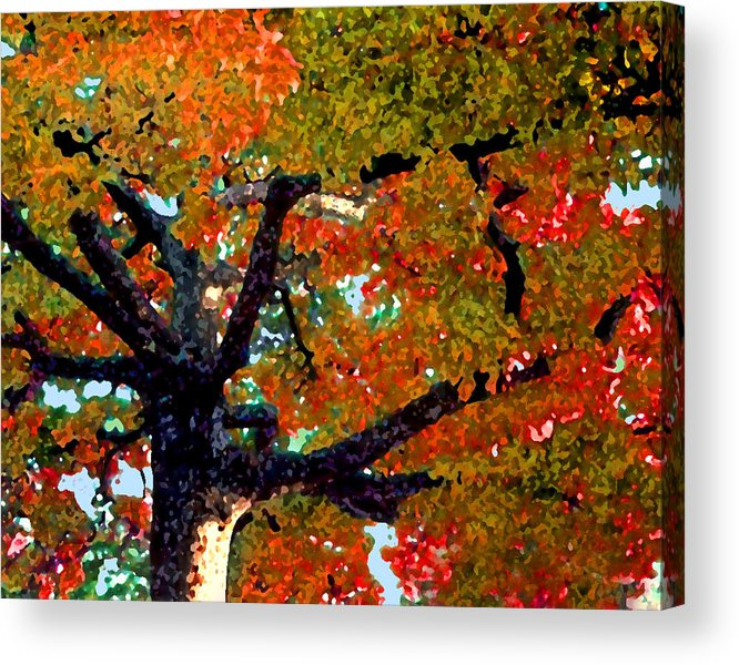 Fall Acrylic Print featuring the photograph Autumn Tree by Steve Karol