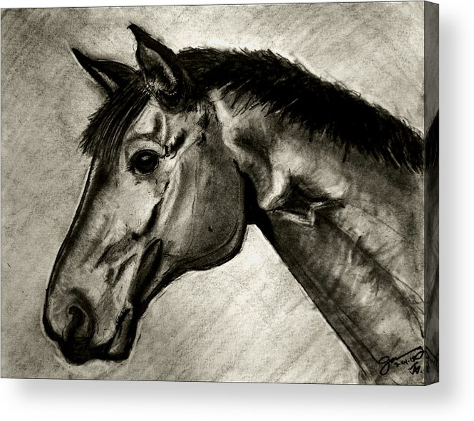 My Friend The Bay Horse Acrylic Print featuring the drawing My Friend The Bay Horse by Jose A Gonzalez Jr