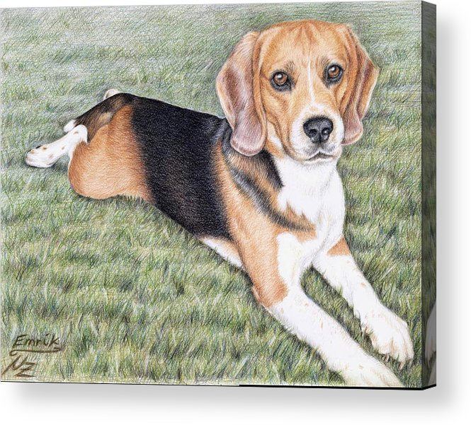 Dog Acrylic Print featuring the drawing Beagle by Nicole Zeug