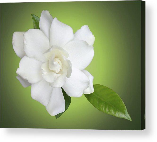 Gardenia Acrylic Print featuring the photograph Billie's Flower by Kristin Elmquist