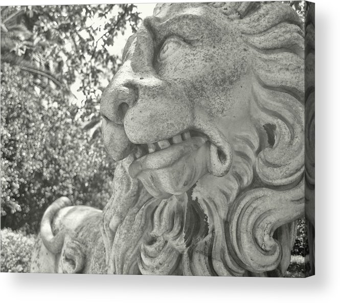 Marble Acrylic Print featuring the photograph Cowardly Lion by JAMART Photography