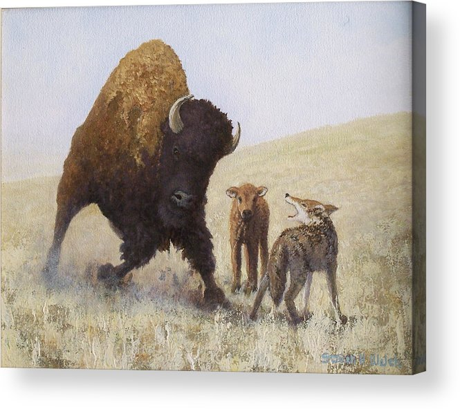 Bison Acrylic Print featuring the painting Defending A Young One by Steven Welch