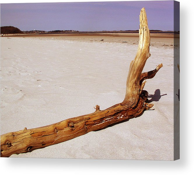 Driftwood Acrylic Print featuring the photograph Driftwood by Mary Capriole