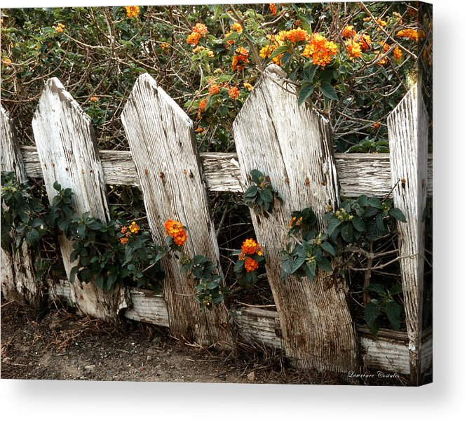 Flowers Acrylic Print featuring the photograph Elsinore Fence by Lawrence Costales