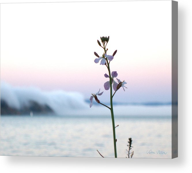 Fog Acrylic Print featuring the photograph Evening Fog Rolling In by Sabine Stetson