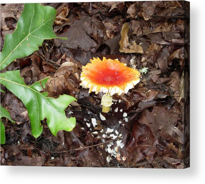 Nature Acrylic Print featuring the photograph Firey Topped Mushroom by Stephanie H Johnson