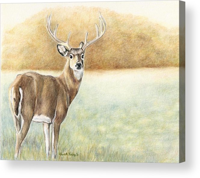 Wildlife Acrylic Print featuring the drawing Foggy Morning Buck by Charlotte Yealey