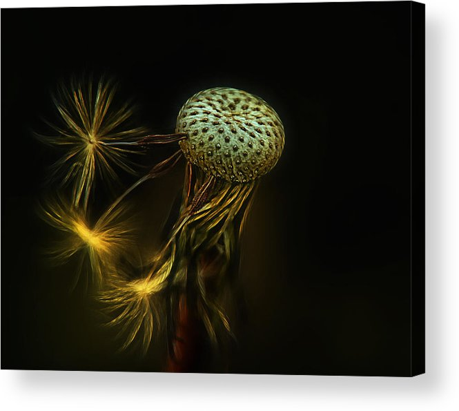 Nature Acrylic Print featuring the photograph Go. . . Jump by Joachim G Pinkawa