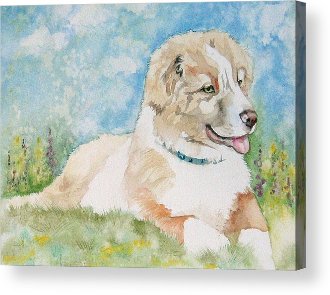 Canine Acrylic Print featuring the painting Hank by Gina Hall