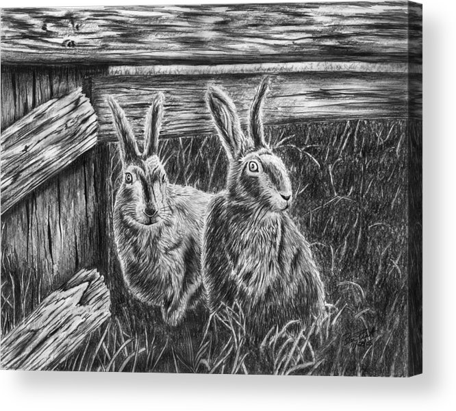 Hare Line Acrylic Print featuring the drawing Hare Line by Peter Piatt