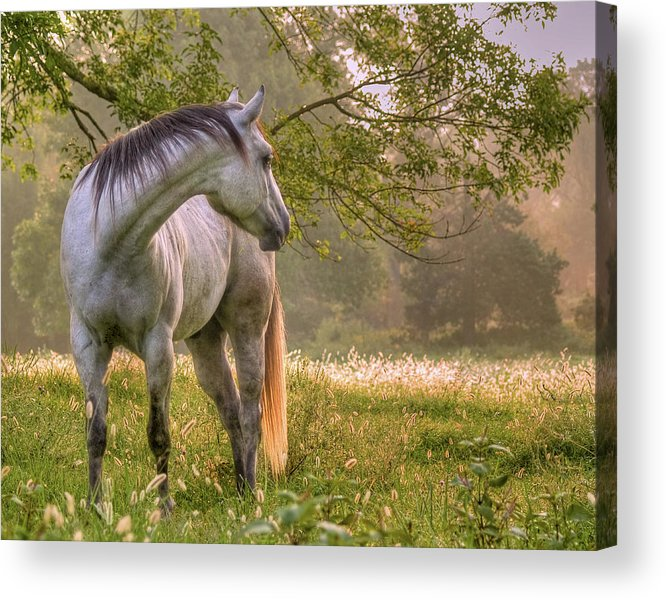 Horse Acrylic Print featuring the photograph Hindsight by Ron McGinnis