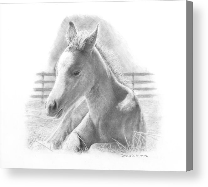 Horse Acrylic Print featuring the drawing Lily by Douglas Kochanski