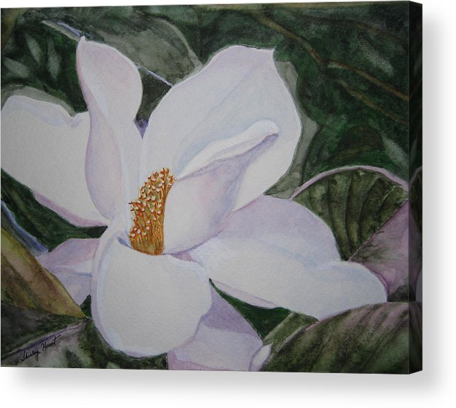 Nature Acrylic Print featuring the painting Magnificent Magnolia by Shirley Braithwaite Hunt