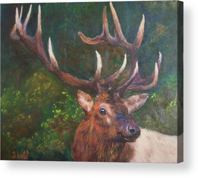Bull Elk Paintings Acrylic Print featuring the painting Majestic by Bill Werle