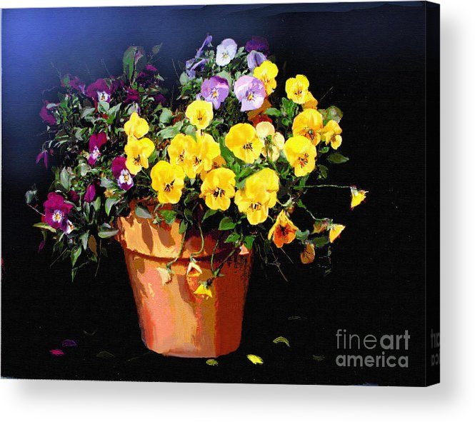 Pansy. Still Life Acrylic Print featuring the painting Mini Pansy Pot by Robert Foster