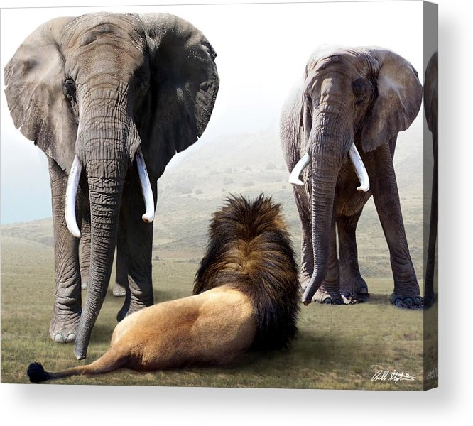 Elephants Acrylic Print featuring the digital art No Fear by Bill Stephens