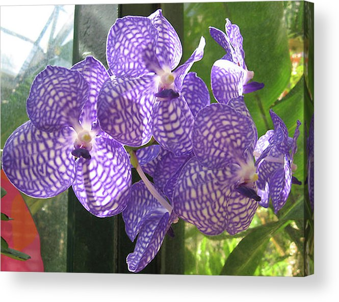 Orchid Acrylic Print featuring the photograph Orchid by Darren Stein