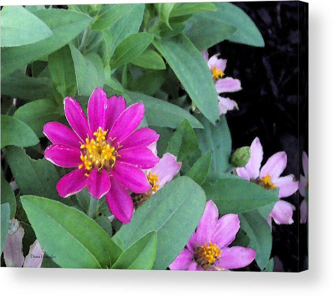 Flowers Acrylic Print featuring the painting Pinky by Diana Gonzalez