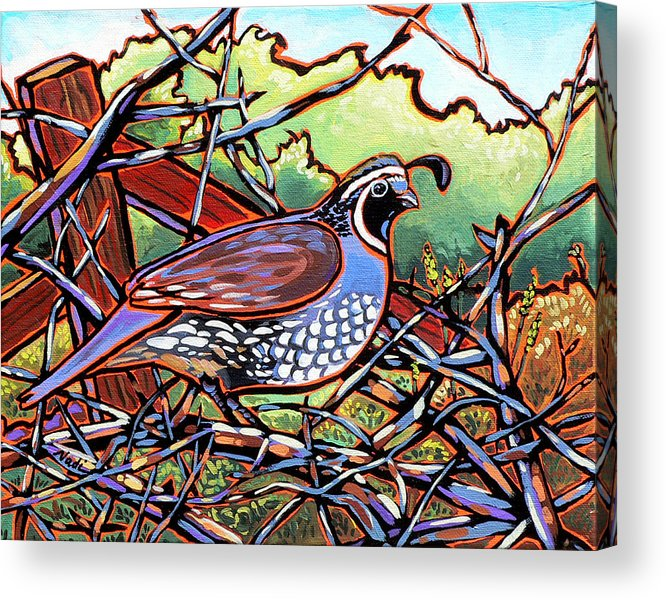Quail Acrylic Print featuring the painting Quail by Nadi Spencer