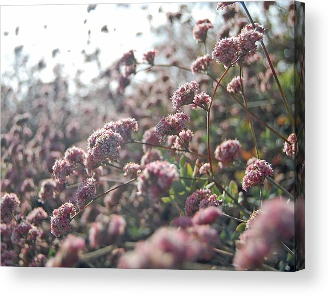 Pink Acrylic Print featuring the photograph Sea Of Pink by Jean Booth