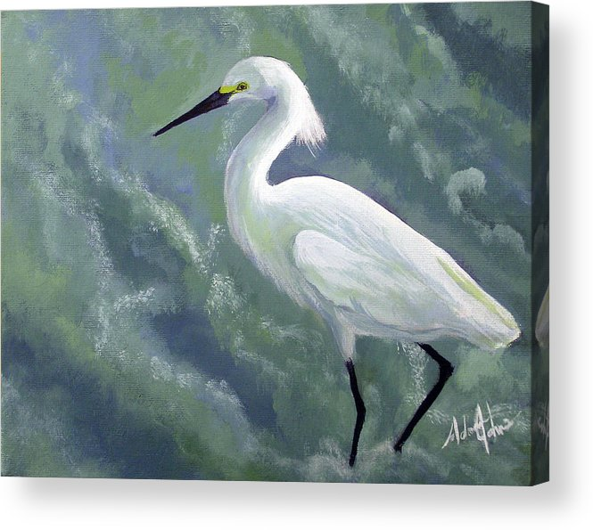 Egret Acrylic Print featuring the painting Snowy Egret In Water by Adam Johnson