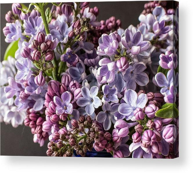 Lilac Acrylic Print featuring the photograph The Lilac by George Fredericks
