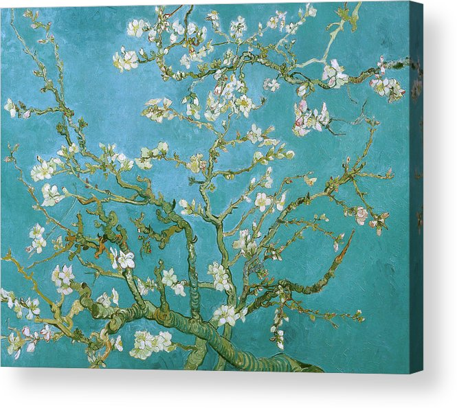 Van Gogh Acrylic Print featuring the painting Van Gogh Blossoming Almond Tree by Vincent Van Gogh