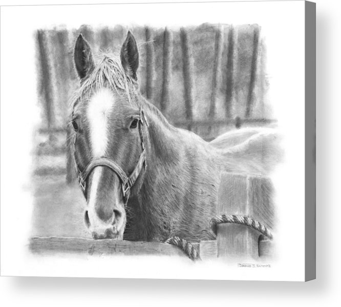Horse Acrylic Print featuring the drawing Watching You by Douglas Kochanski