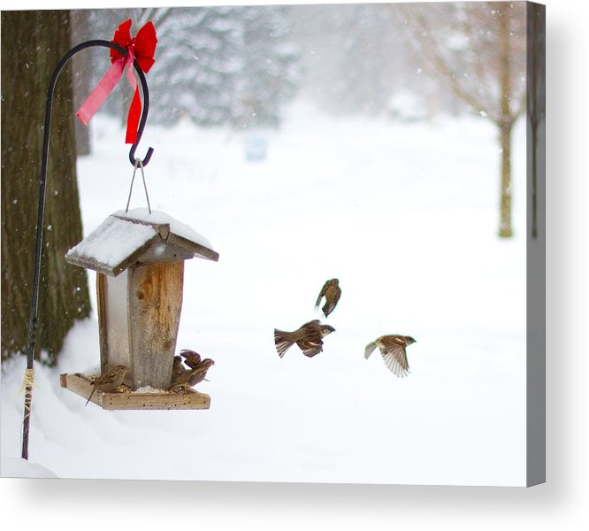 Birds Acrylic Print featuring the photograph Winter Birds by Tim Fitzwater