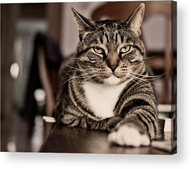 Alertness Acrylic Print featuring the photograph Proud Cat by Olga Tremblay
