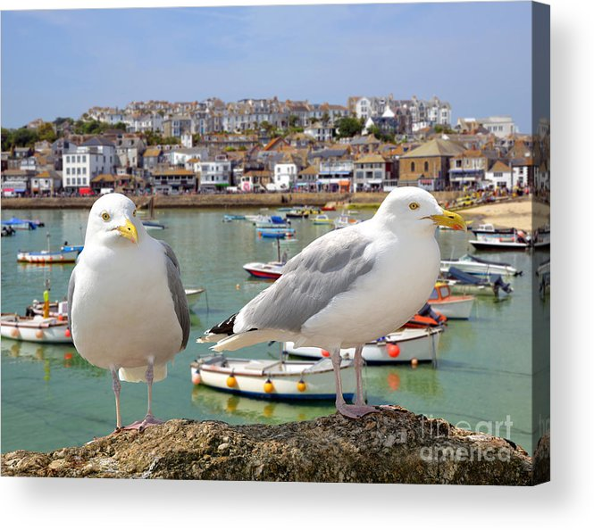 Big Acrylic Print featuring the photograph Seagulls In St Ives Harbour Cornwall by Jaroslava V