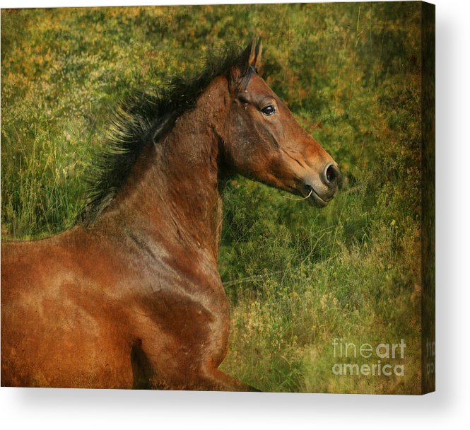 Horse Acrylic Print featuring the photograph The Bay Horse by Angel Ciesniarska