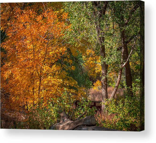 Tree Acrylic Print featuring the photograph Along The Trail by Ernie Echols